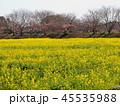 みなみの桜と菜の花まつり 45535988