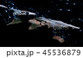 ネットワーク 通信 グローバルのイラスト 45536879