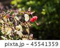 背景 花 お花の写真 45541359