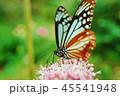 アサギマダラ 45541948