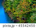 宝仙湖 紅葉 風景の写真 45542450