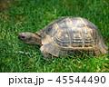 は虫類 ハ虫類 爬虫類の写真 45544490