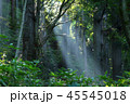 朝 山林 光芒の写真 45545018