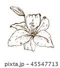 花 フローラル ベクターのイラスト 45547713