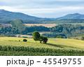 北海道 風景 美瑛の写真 45549755