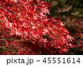 紅葉 ライトアップ 秋の写真 45551614