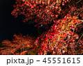 紅葉 ライトアップ 秋の写真 45551615