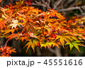 紅葉 ライトアップ 秋の写真 45551616