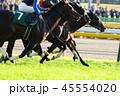 競馬 競走馬 サラブレッドの写真 45554020