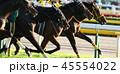競馬 競走馬 サラブレッドの写真 45554022