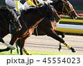 競馬 競走馬 サラブレッドの写真 45554023