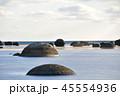 鵜ノ崎海岸 風景 自然の写真 45554936