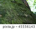 杉の幹 45556143
