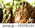 杉の幹 45556144