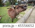 オーストラリア カンガルー 海外 ミーアキャット 45556652