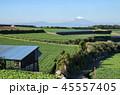 大根 畑 野菜の写真 45557405