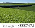 大根 畑 秋の写真 45557478