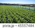 大根 畑 秋の写真 45557484