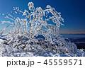 樹氷 冬 快晴の写真 45559571