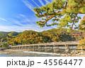 嵐山 紅葉 45564477