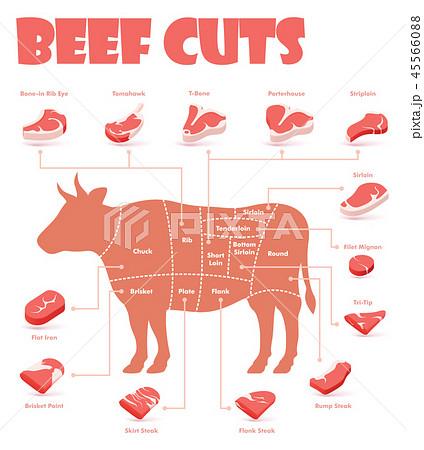 Vector beef cuts chart 45566088