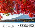 河口湖 湖 紅葉の写真 45568452