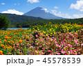 花 風景 山の写真 45578539