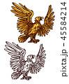 イーグル 鷹 鳥のイラスト 45584214