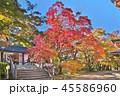 秋 紅葉 永源寺の写真 45586960