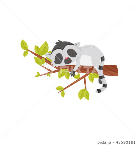 Adorable lemur sleeping on tree branch. Exotic animal with long striped tail. Flat vector icon 45590181