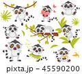 キツネザル科 狐猿 ベクトルのイラスト 45590200