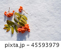Rowanberry on snow top view 45593979