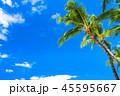 ヤシの木 空 青空の写真 45595667