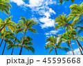ヤシの木 空 青空の写真 45595668