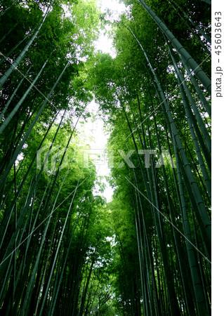 日本 京都 緑の竹藪 竹林 Japan Kyoto green bamboo forest  45603643