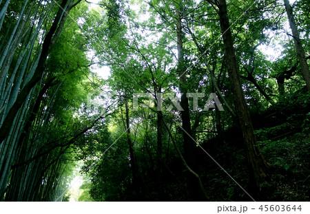 日本 京都 緑の竹藪 竹林 Japan Kyoto green bamboo forest 45603644