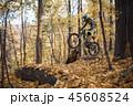 森林 林 森の写真 45608524