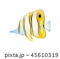 魚 ベクトル チョウのイラスト 45610319