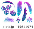 ベクトル トロピカル 熱帯のイラスト 45611974