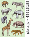 ぞう ゾウ 象のイラスト 45613188