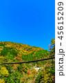 樅木吊橋 紅葉 吊り橋の写真 45615209
