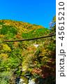 樅木吊橋 紅葉 吊り橋の写真 45615210