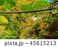 樅木吊橋 紅葉 吊り橋の写真 45615213