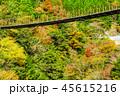 樅木吊橋 紅葉 吊り橋の写真 45615216