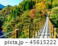 樅木吊橋 紅葉 吊り橋の写真 45615222
