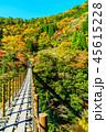 樅木吊橋 紅葉 吊り橋の写真 45615228