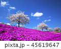 桜 芝桜 満開の写真 45619647