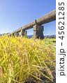 安積疏水 稲穂 稲の写真 45621285