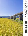安積疏水 稲穂 稲の写真 45621287