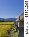 安積疏水 稲穂 稲の写真 45621295